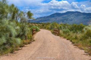 El Camino es de tierra compactada